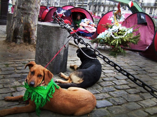'The Dogs of Christmas', Canal Du St. Martin, Paris, France