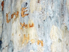 'Love You Hon' in a gum tree